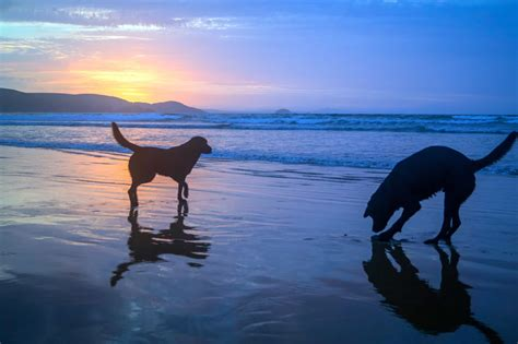 Free picture: water, beach, silhouette, sunrise, pet, dog