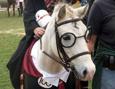 22 Costumes That Prove Horses Always Win At Halloween