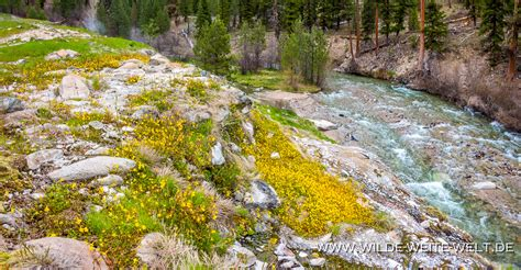 Hot Springs in Idaho entlang des Hyw # 21: Snake Pit